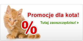 Promocje dla kota