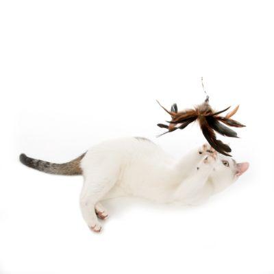 A saisir : zoolove Canne à pêche 3 en 1 en métal pour chat en promo !