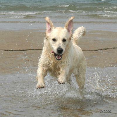 Acana Pacifica pienso para perros