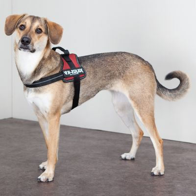Arnés Julius-K9 Power burdeos para perros