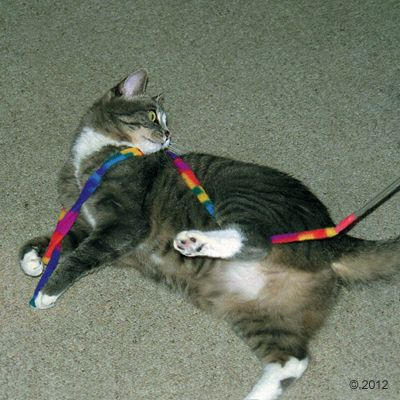 Cat Charmer Cat Dangler