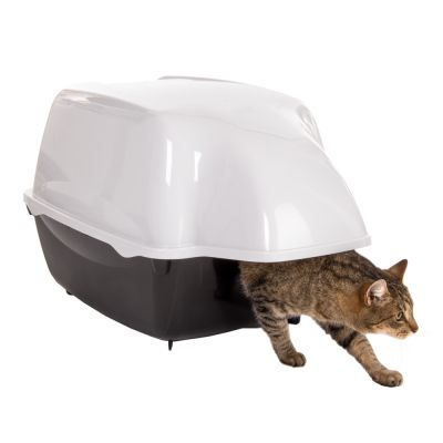 cat pooping outside box