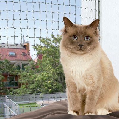 olive chat Mais ce cas ne concerne pas seulement les chiens  il en va de même avec tout  animal de compagnie, que ce soit un oiseau, un reptile, un chat en parlant de.