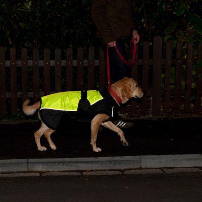 Hundemantel Illume Nite Neon
