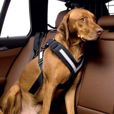 allsafe hunde sicherheitsgurt g nstig kaufen bei zooplus. Black Bedroom Furniture Sets. Home Design Ideas