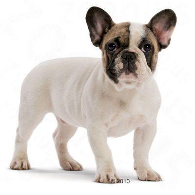 royal canin french bulldog junior great deals at. Black Bedroom Furniture Sets. Home Design Ideas