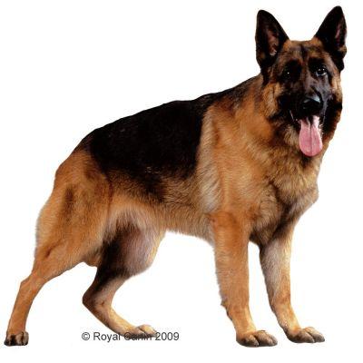 Best Dry Dog Food For German Shepherds Uk
