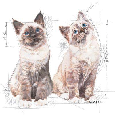 Royal Canin Kitten Instinctive en sauce pour chaton