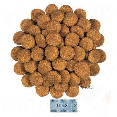 royal canin health nutrition dermacomfort medium - croquettes pour