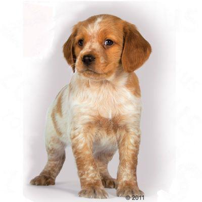 royal canin medium junior - croquettes pour chiot - zooplus