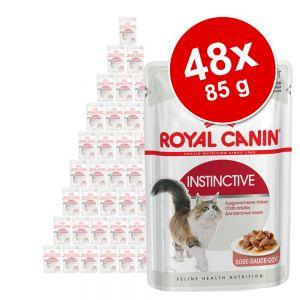 Royal Canin Wet Cat Food Multibuy 48 X 85g Stock Up Amp Save