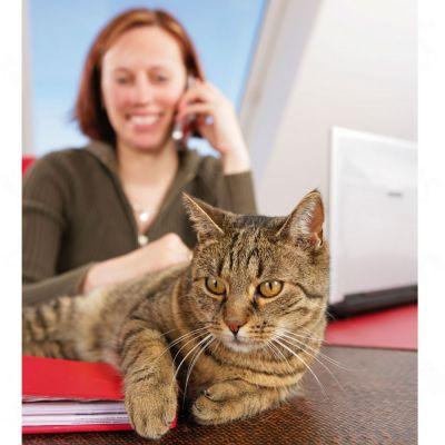 Sanabelle Sensitive met Gevogelte Kattenvoer