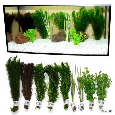 Set di piante per acquario zooplants 39 goldfish 39 zooplus for Piante acquisto