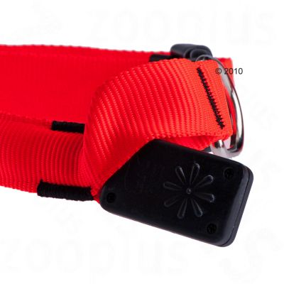 Trixie Flash Collar - Neon Orange