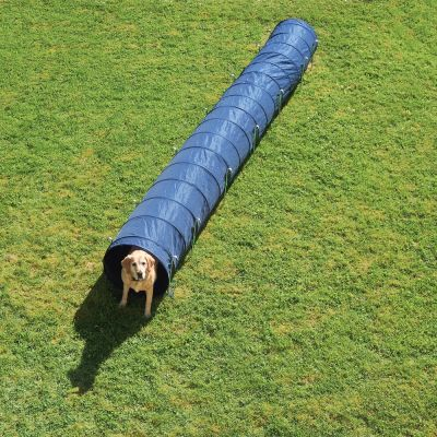 tunnel-agility-pour-chien