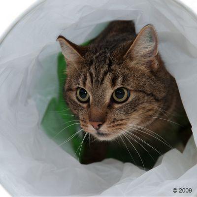 Tunnel à bruissement Chenille pour chat